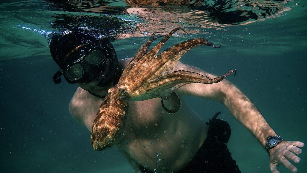 My Octopus Teacher - © Netflix