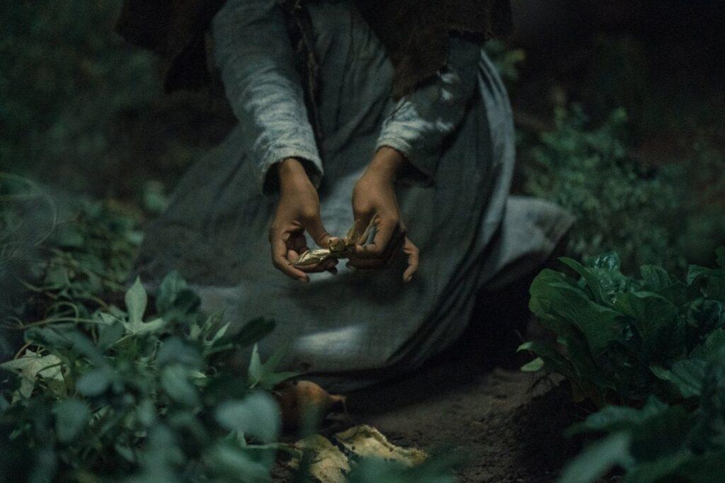 The Underground Railroad - Credits: Amazon Studios/Prime Video